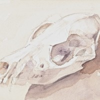 Dog Skull 0006