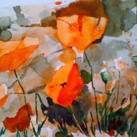 Poppies 0435