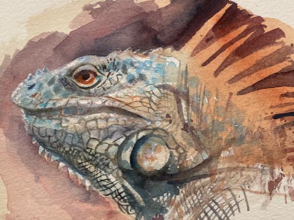 When is an iguana not an iguana?